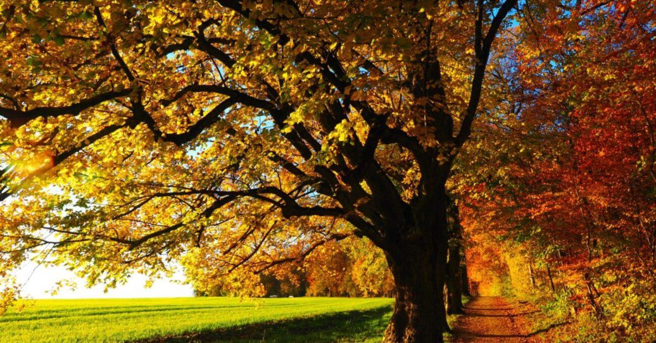 tree-779827_1920